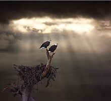 TWO BALD EAGLES AND STORM by TomBaumker