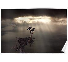 TWO BALD EAGLES AND STORM Poster