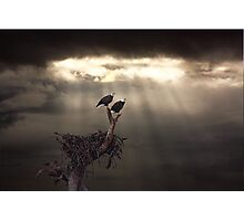 TWO BALD EAGLES AND STORM Photographic Print