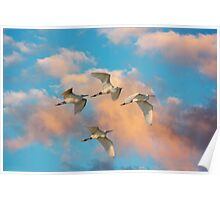 SNOWY EGRETS AT SUNRISE Poster