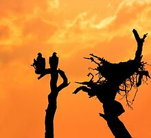 BALD EAGLES AT SUNSET by TomBaumker