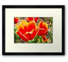 On Fire Tulips Framed Print