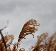 Wildgrass before the rain Sticker