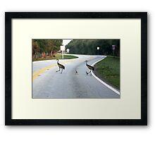 SANDHILL CRANES Framed Print