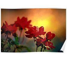 Sunrise On Roses Poster