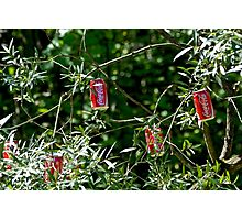 """""""Hybrid"""" - Coca-Cola - willow ... Photographic Print"""