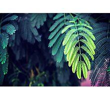 Green garden 3 Photographic Print