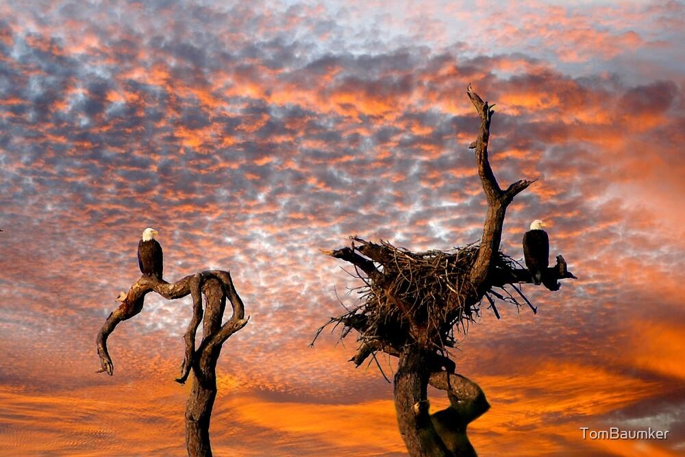 TWO BALD EAGLES by TomBaumker