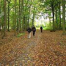 The Beech Forrest by hans p olsen