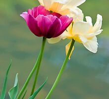 Tulips by the Water's Edge by Gerda Grice