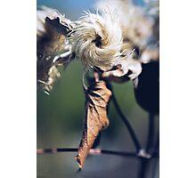 Pinwheel Photographic Print