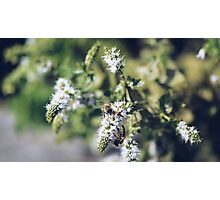 Forager 3 Photographic Print