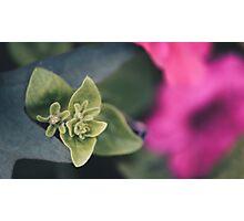 Fuzzflower Photographic Print