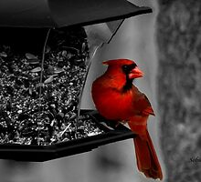 Cardinal at the feeder. by Rosemary Sobiera