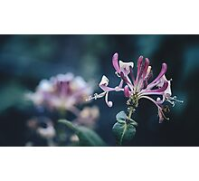 Grasping Photographic Print