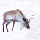 Slim Pickings In The Snow by vette