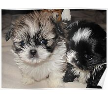 Puppies, Poster