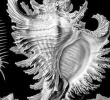 Prosobranchia, vintage sea life mollusca and gastropods illustration Sticker