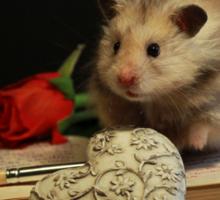 Hamster write a poem Sticker