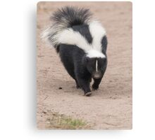 Skunk has right of way Canvas Print