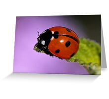 Ready To Bug Off Greeting Card