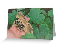 Just spread my wings! Greeting Card