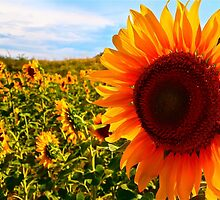 The Happy Sunflower by Natsy