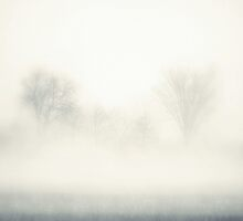 Trees Greet the Fog by Brian Gaynor