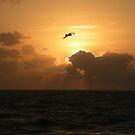 Morning Glow by Donna Adamski