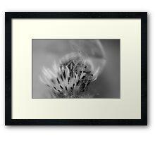 Honey Bee Black and White Framed Print