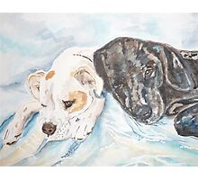 Dogs Resting  Photographic Print