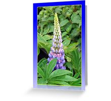 Lovely Lupin Greeting Card