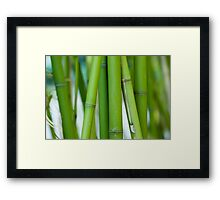 Green Bamboo Framed Print