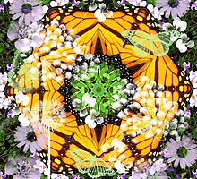 A Kaleidoscope of Butterfly Wings. by joche