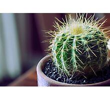 Little cactus Photographic Print
