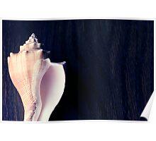 Marine sea shell dark blue background Poster