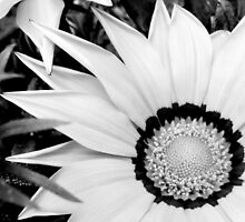 white treasure flower by by-jwp
