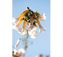 In Bloom - Five Photographic Print