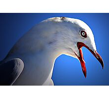 Angry Seagull Photographic Print