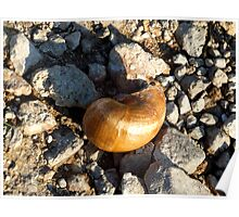 Sea Shell by the Sea Shore Poster