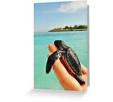 Paradise turtle Greeting Card