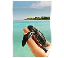 Paradise turtle Poster