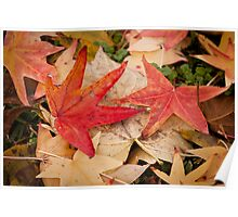 Fall Color Poster