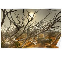 Burnt snowgum forest, The Bluff Poster