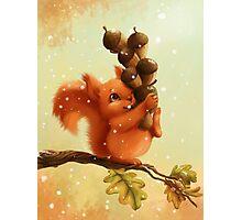 Stupid Squirrel Photographic Print