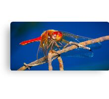 Scarlet Dragonfly Canvas Print