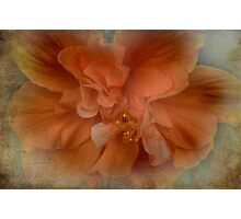 Shades of Orange Photographic Print