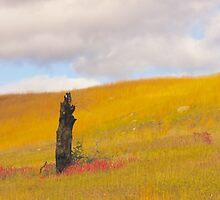 Golden Hill Prairie of Minnesota by lifetravelphoto