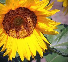 Hello Sunflower! by Jodie Keefe