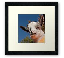 Baby Goat Framed Print